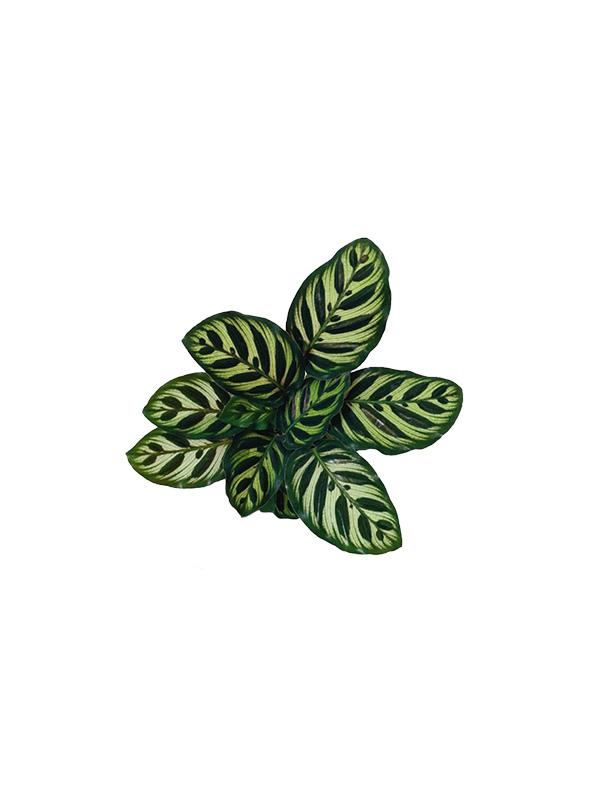 Leaf – Unisex Tshirt